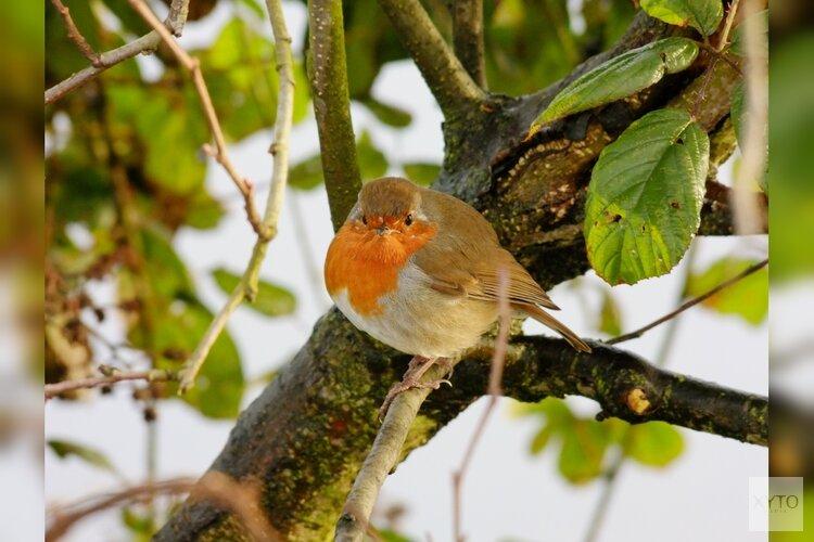 Help de vogels de winter door!