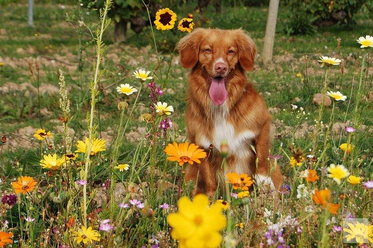 Workshop natuurgeneeskundige EHBO voor huisdieren